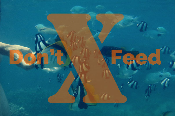 Underwater photo of a hand holding out food and surrounded by reef fish. Text overlay reads, Don't feed.